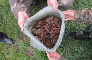 Ловля раков в ярославской области