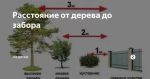 Противопожарное расстояние от жилого дома до деревьев и кустарника