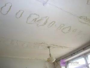 Если в квартире грибок куда обращаться беларусь