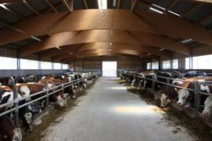 Мини ферма для бычков на 100 голов