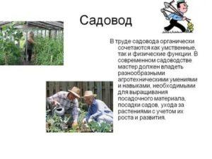 Должностные обязанности агронома садовода