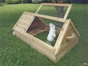 Каких животных разрешено держать на даче