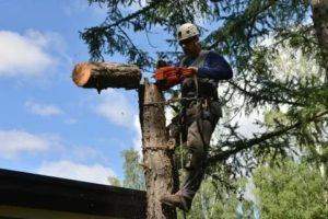 Аварийные деревья куда обращаться